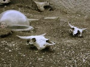 Bayla Neren_Skull